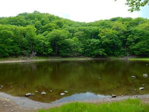 緑したたる大沼公園