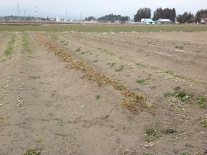 広々とした畑