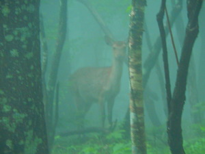 霧の森の中で