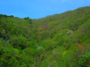 山頂は優しい芽吹きの色がまだ