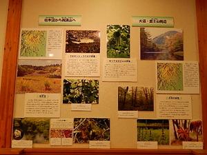 栃木県県民の森森林展示館
