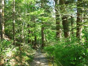 フィトンチッドの森