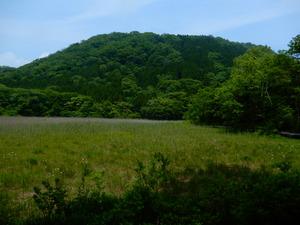 初夏のヨシ沼