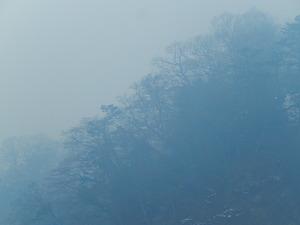 霧のもみじ谷