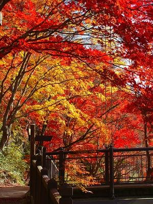 紅のつり橋のモミジこんなにきれいです
