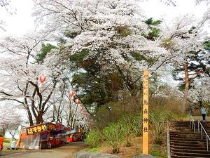 烏ヶ森公園の桜