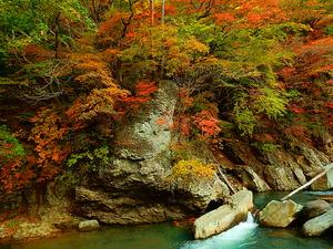 仙人岩吊橋周辺の紅葉