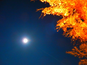 満月とモミジト