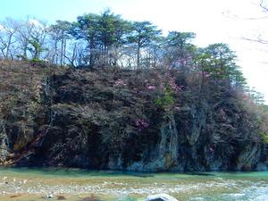 彩つむぎ対岸のヤシオツツジ