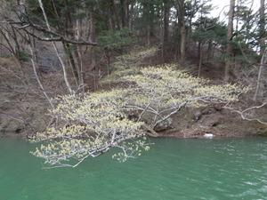 木々が川にかぶるように