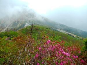 ムラサキヤシオと茶臼岳