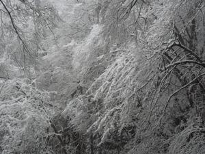 昨日の雪景色