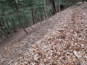 落ち葉の林の中を進む