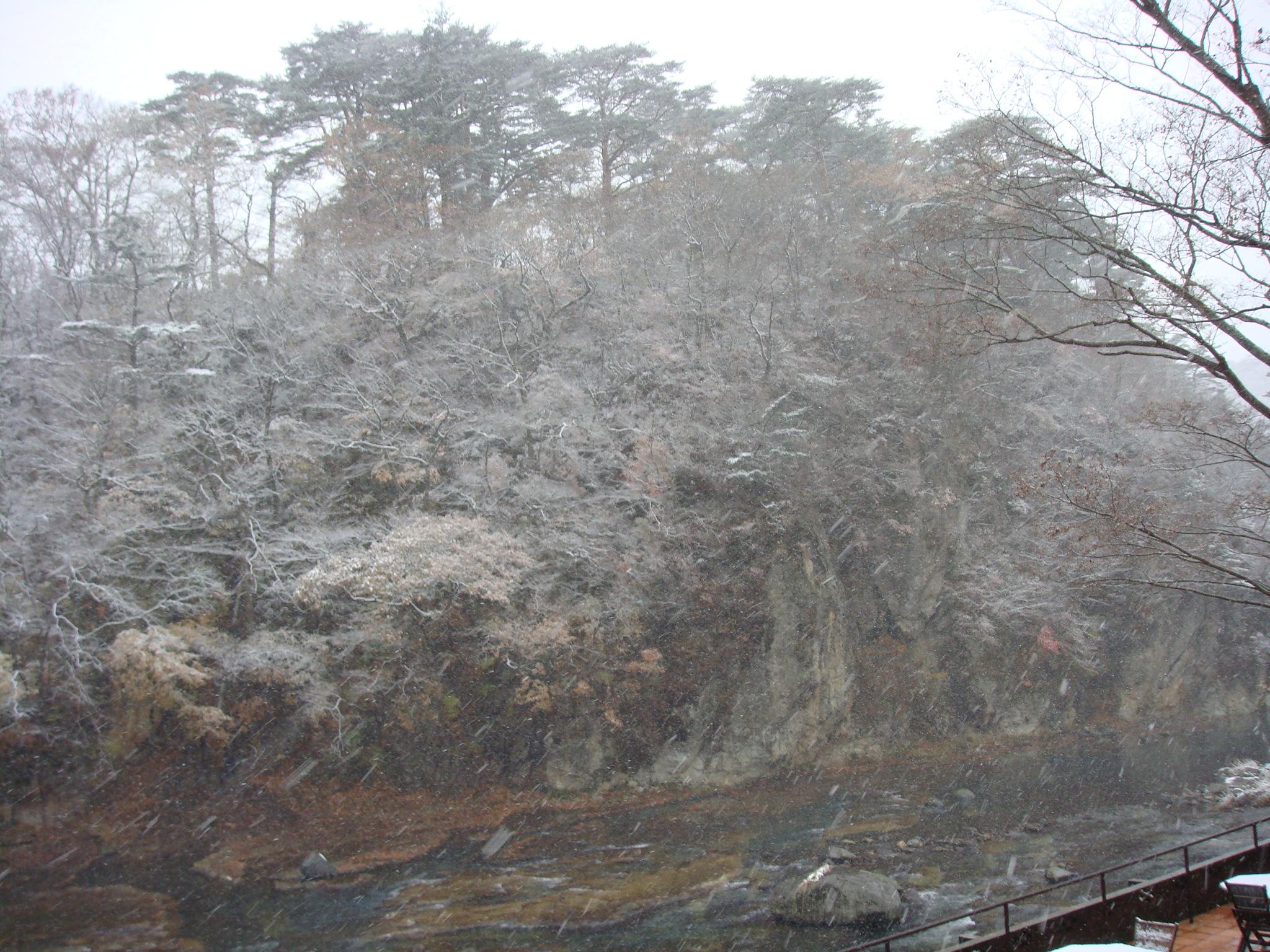 11月22日の雪景色その2