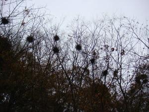 川鵜の巣には住人はなく・・・