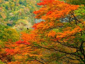 四季の里橋周辺の紅葉