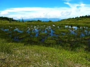 田代山山頂湿原
