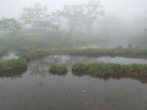 霧の沼ッ原湿原