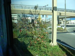 街路樹にもりんご