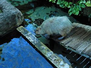 なかがわ水遊園