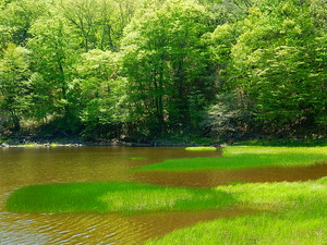 5月の大沼