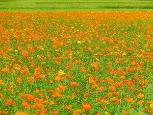 一面の花景色