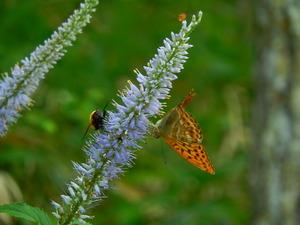 昆虫の楽園