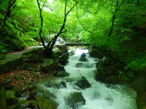 美しい渓流沿いに