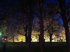 木々のシルエットが美しい
