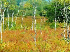 秋の戦場ヶ原