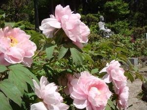 桃色の花も2012.5.19