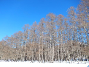 冬の光徳牧場
