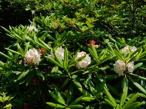 那須の初夏の花