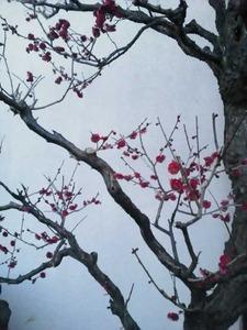 日本画のような梅