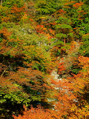 四季の里の紅葉