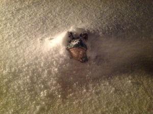 雪に埋もれた蛙くん