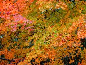 温泉街最後の紅葉