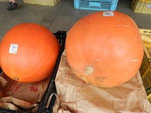 ハロウィーン用かぼちゃ
