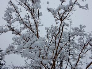 2017.3.27朝の雪景色