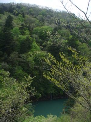 新緑と水の調和