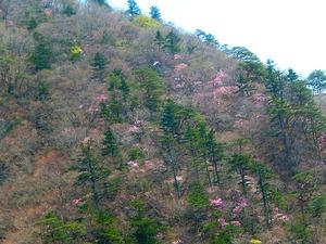 天狗岩向かい側の山