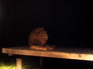 オスライオンのアール