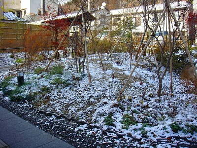 11月に初雪が積もりました