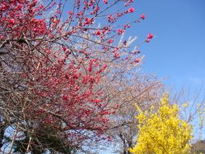 様々な色の花