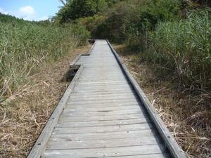 ヨシが刈られて歩きやすくなった木道