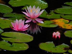 上三依水生植物園
