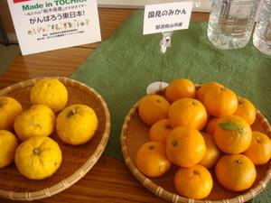 那須烏山市で栽培されているみかん