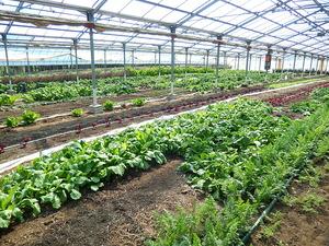 野菜栽培ハウス