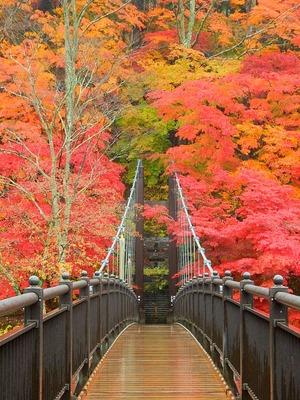 紅の吊橋11.11