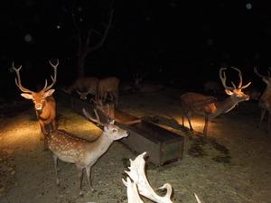 色々な鹿がいっぱい